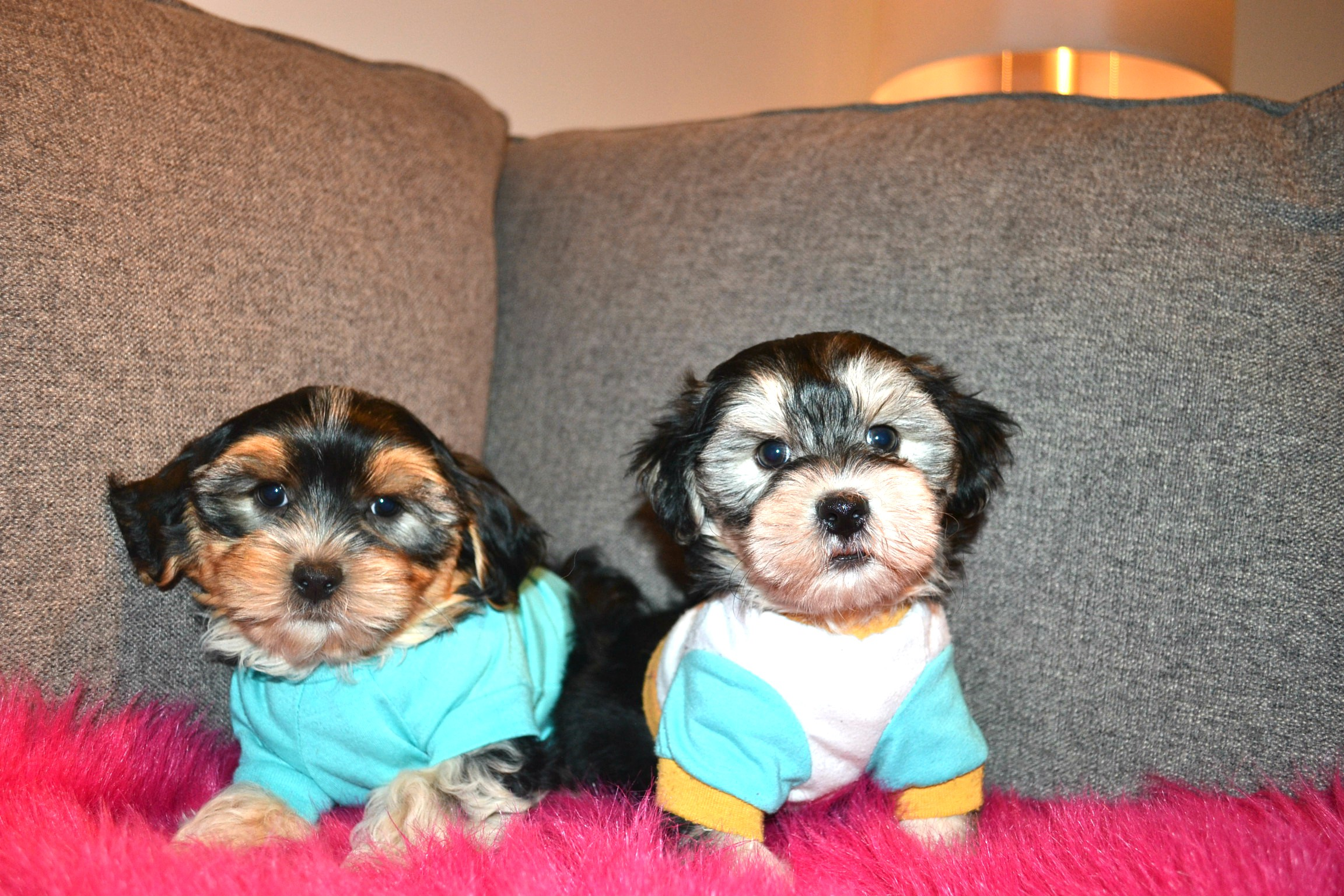 TOY TEDDY MORKIES
